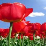 آرزوی بهاری ـ شعر بهاری از محترم ف.بری